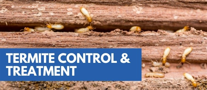Termite Control and Treatment Services