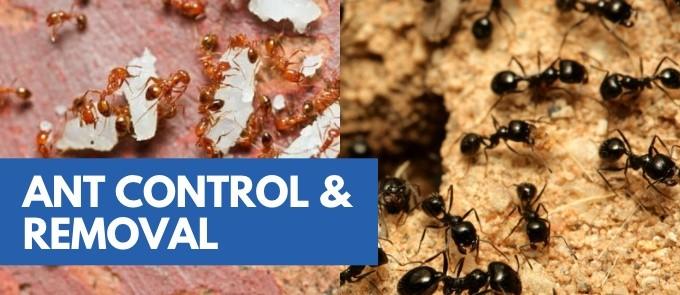 Ants Control & Treatment Service