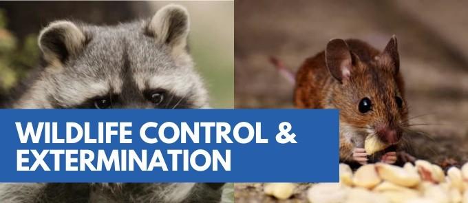 Wildlife Control & Removal Service