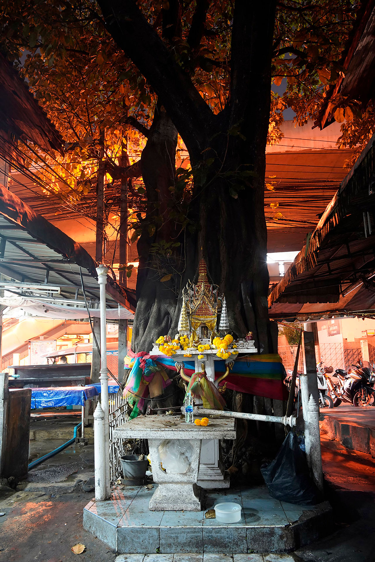 Black Tree Altar