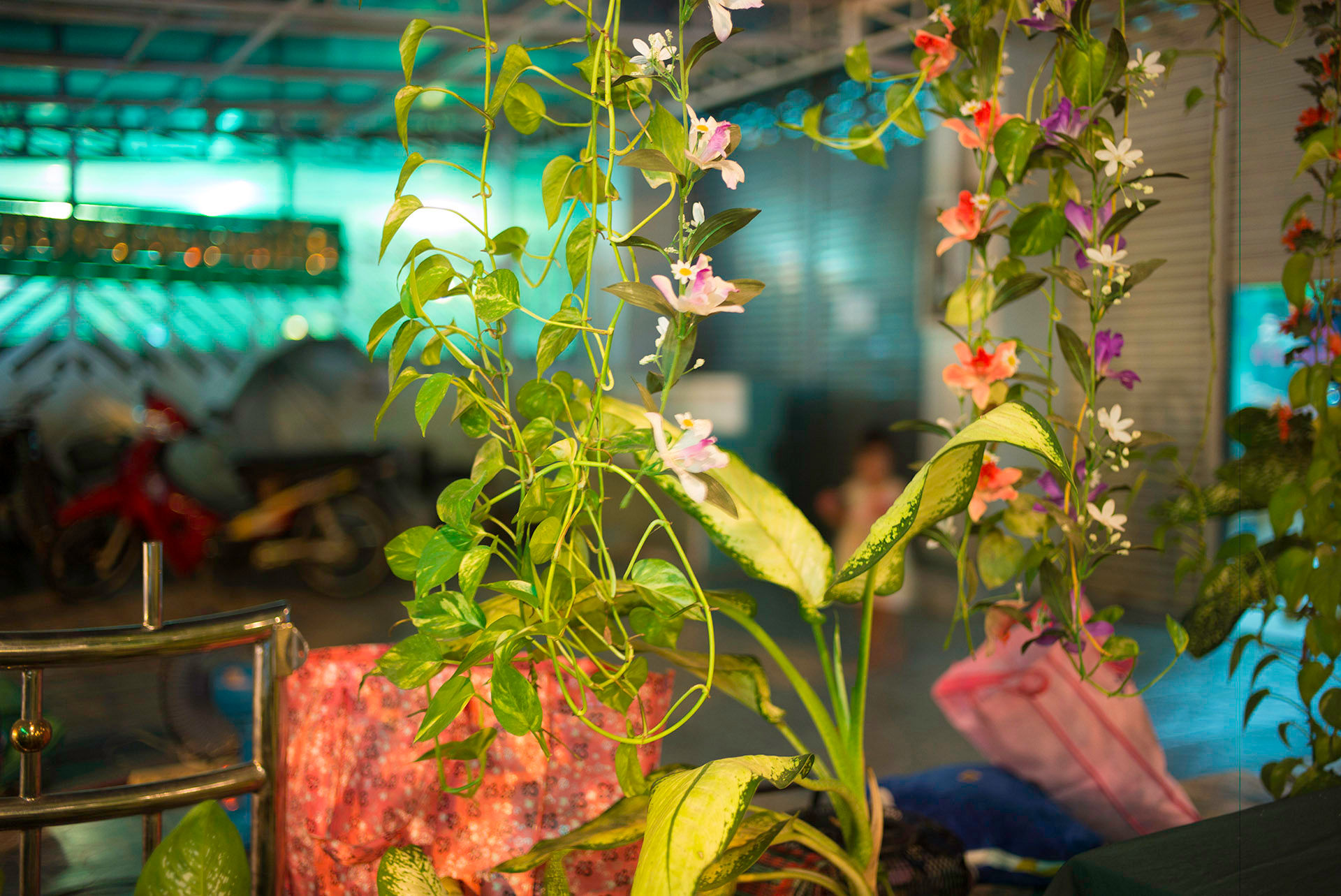 Restaurant Flowers, Chiang Mai