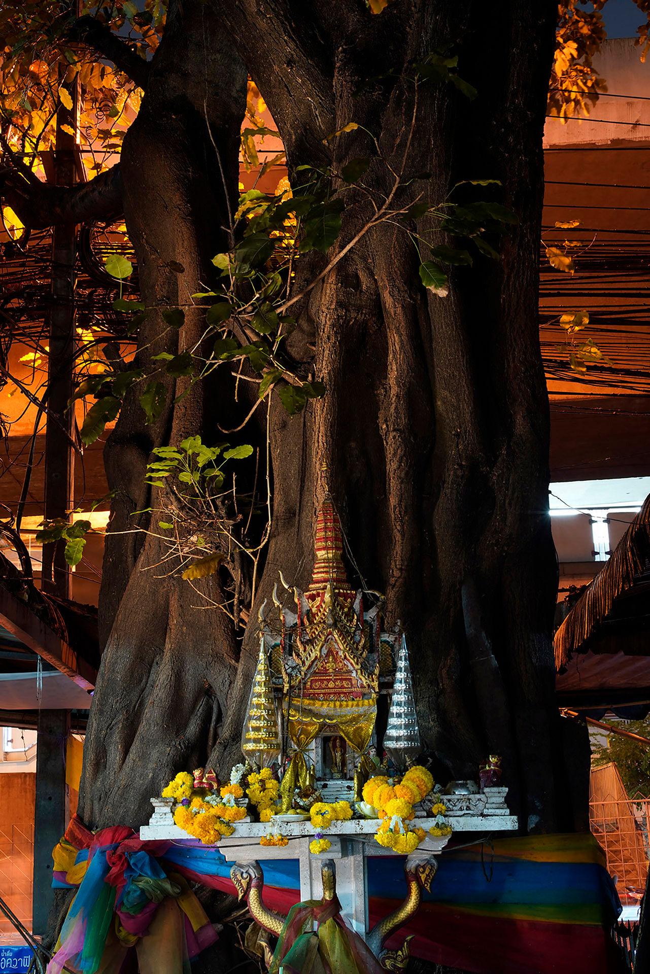 Tree Altar