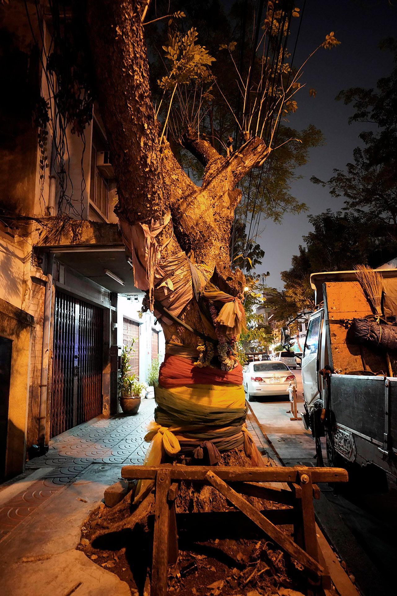 Wrapped Tree Talat Noi
