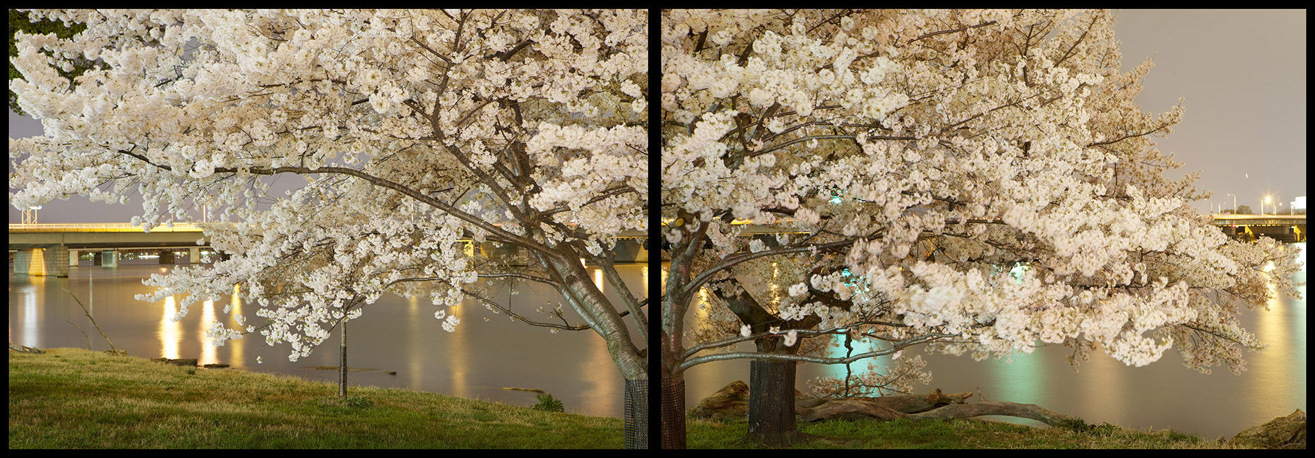 Cherry Blossom Diptych