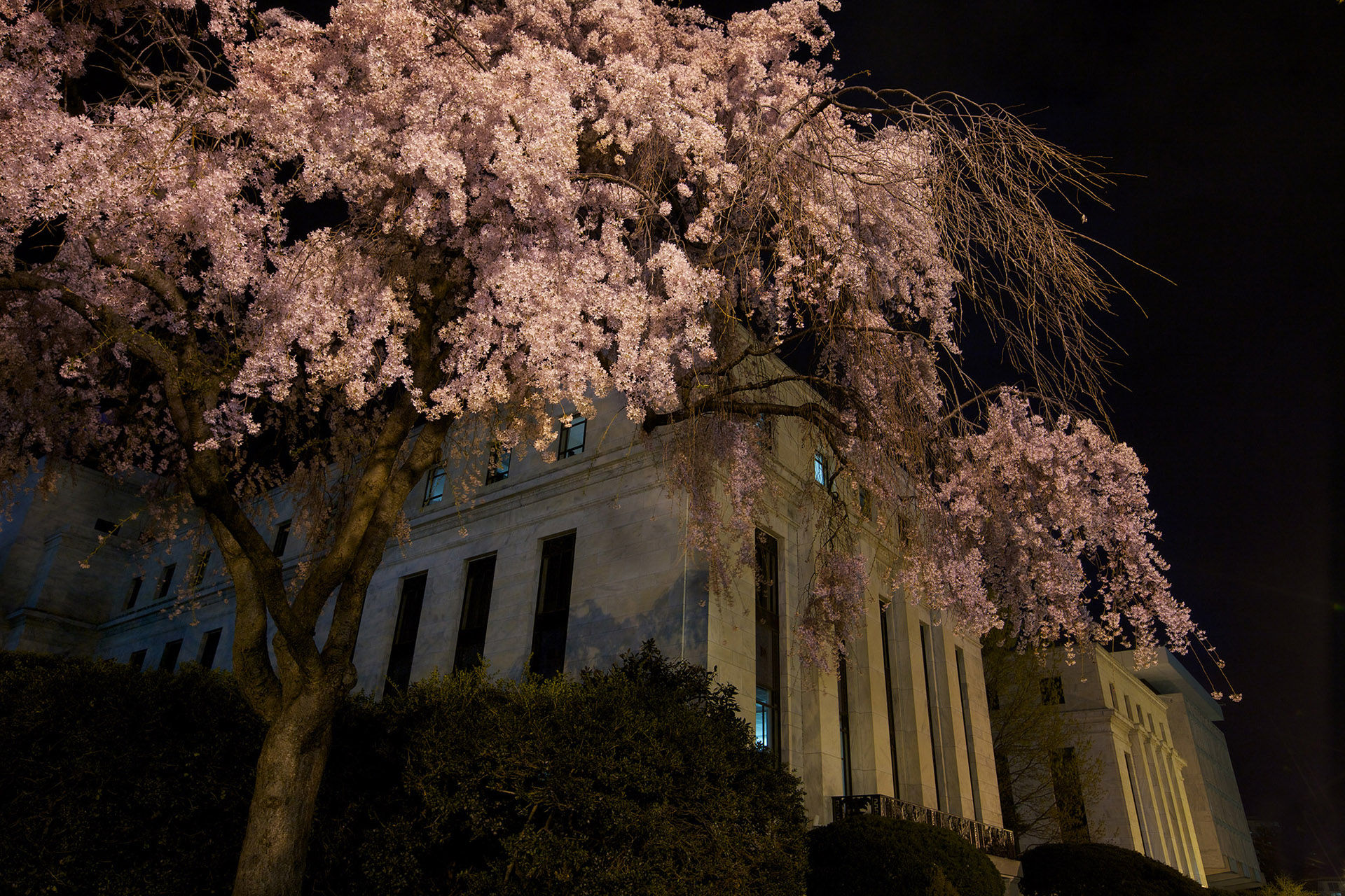 Cherry Tree, Federal Reserve Building