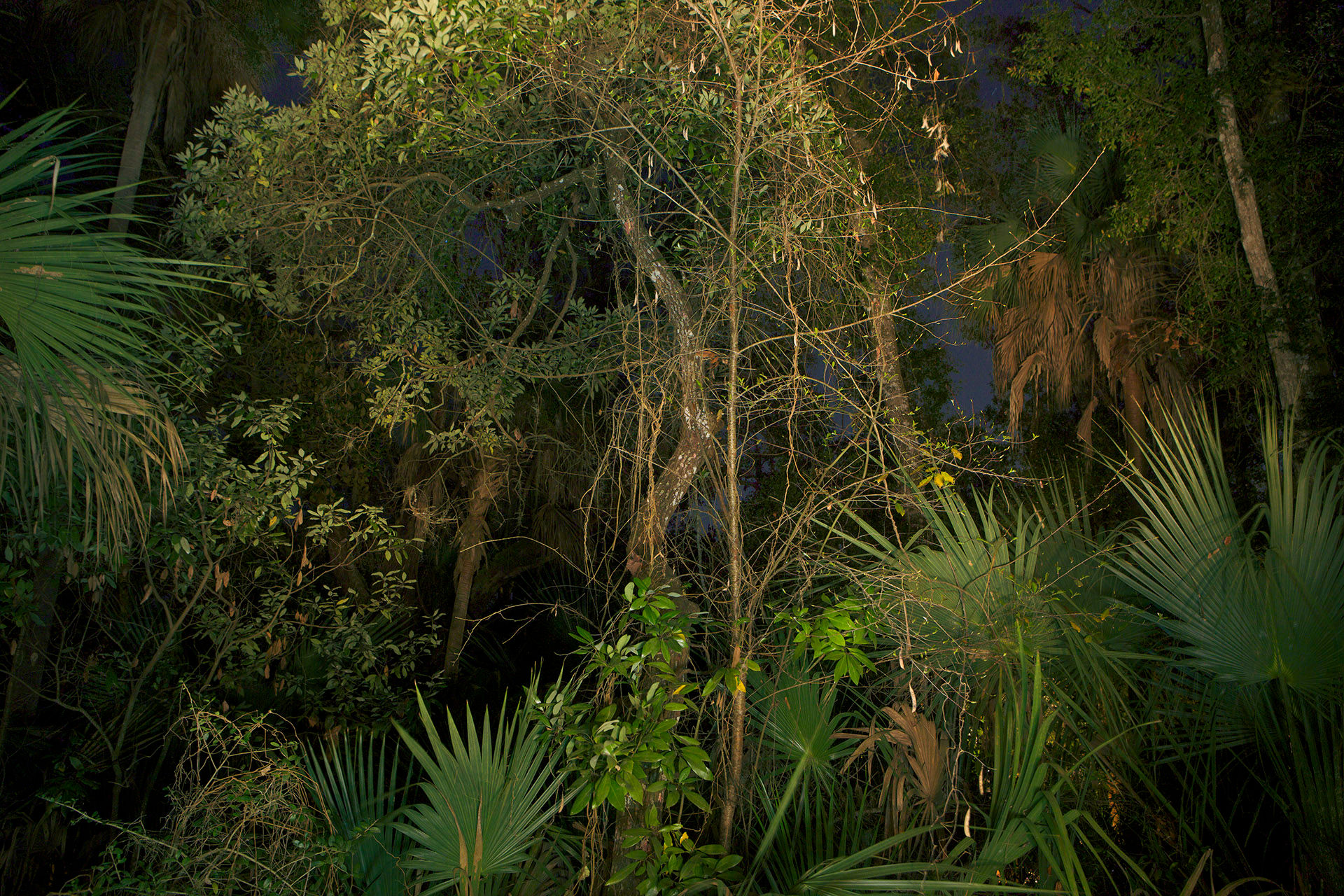 Night Forest Florida