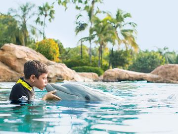 TripAdvisor axes tickets to whale and dolphin parks
