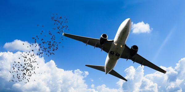 OAG interview air travel data