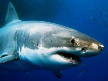 Amadeus identifies corporate shark as key business travel segment