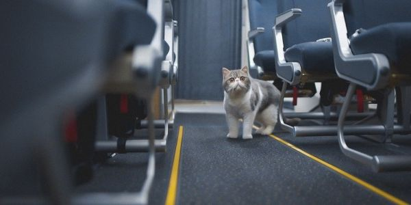 Thomas Cook Airlines gets cute with cats in latest digital-only campaign
