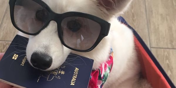 Unisys aims to ease the travel experience for pets and their humans