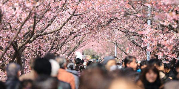 4 essential search marketing strategies to capture spring travel demand