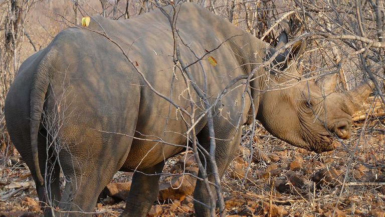 Clients may catch sight of the Big Five while visiting the Stanley & Livingstone Private Game Reserve.
