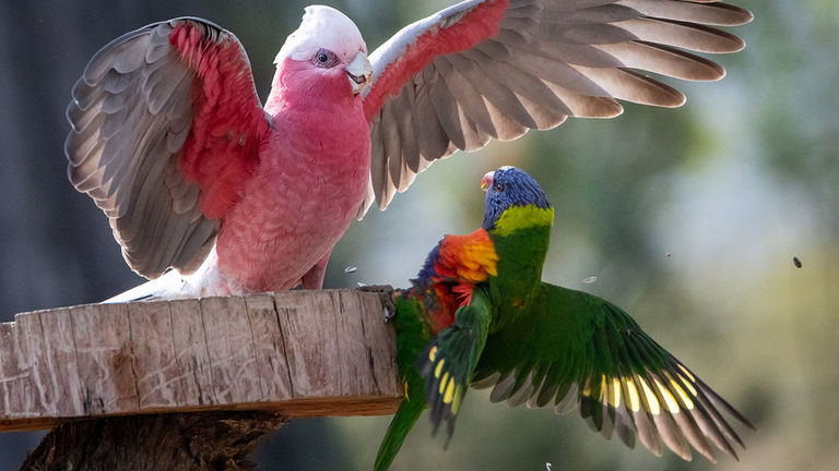 The Woods Farm features numerous colorful birds, which add to the magic of the property.
