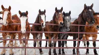 Hotel Review: The Home Ranch in Colorado