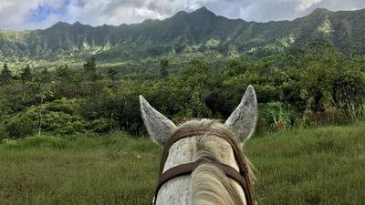 5 Reasons to Visit Kilauea, Kauai