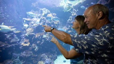 How Seniors Can Save on Hawaii Travel
