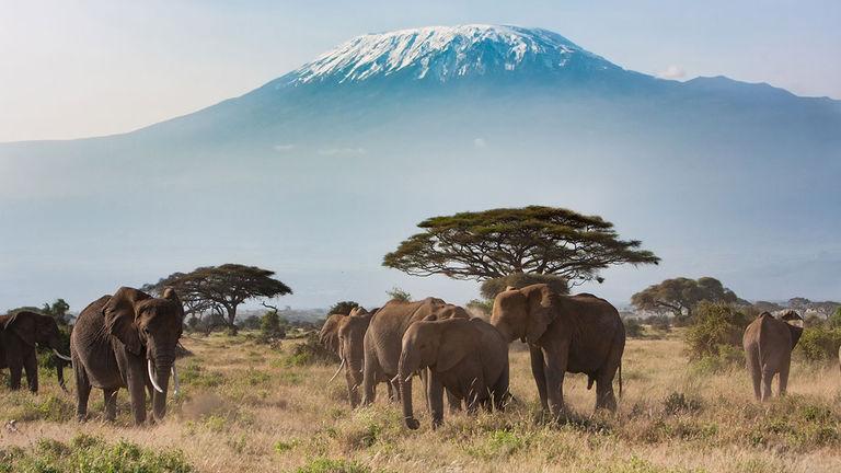 Tanzania is a hot international destination.