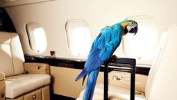 More pets are now taking to the skies in comfort in the cabin
