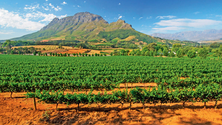 Vineyards in South Africa's Stellenbosch district with the Simonsberg mountain in the background.