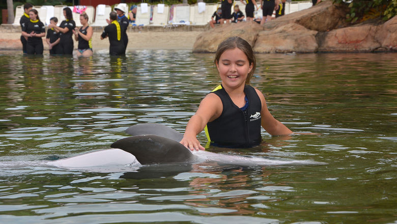 The author's daughter, Ailigh, encounters a dolphin at Discovery Cove.