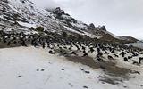 Voyage to Antarctica