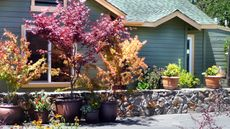 Sonoma's Best Guest Cottages