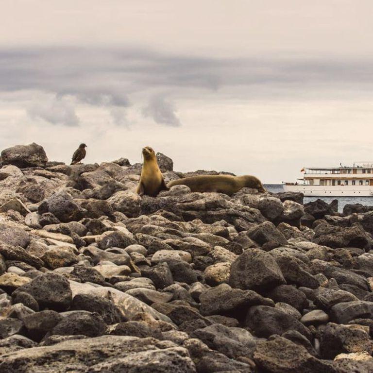 Quasar Expeditions Cruises & Ships