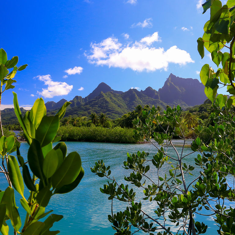 Oceania & South Pacific Cruises