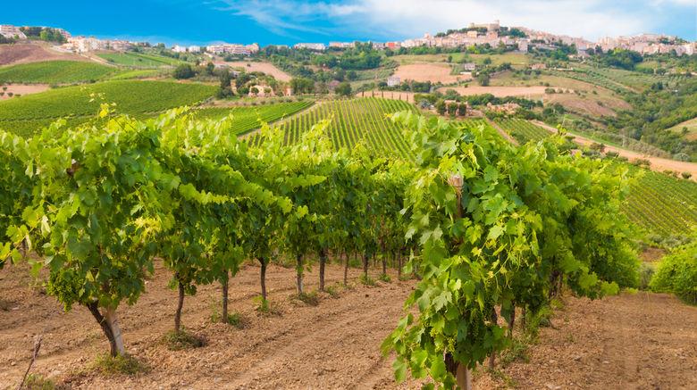 <b>Bordeaux Scenery</b>