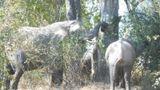 Zikomo Safari Camp Other