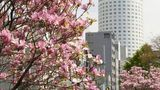 Sapporo Prince Hotel Exterior