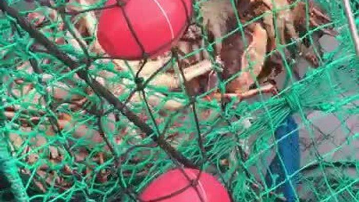 King Crab Safari in Norway
