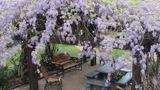 Vineyard Court Designer Suites Hotel Banquet