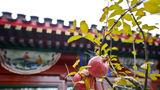Beijing Courtyards Exterior