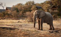 Savute Elephant Lodge, a Belmond Safari