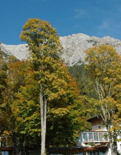 Alpenhotel & Villa Ramsauhof