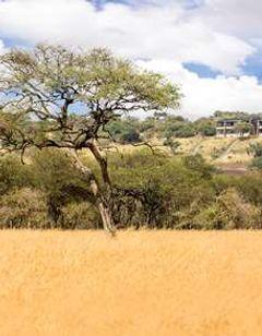 Melia Serengeti lodge