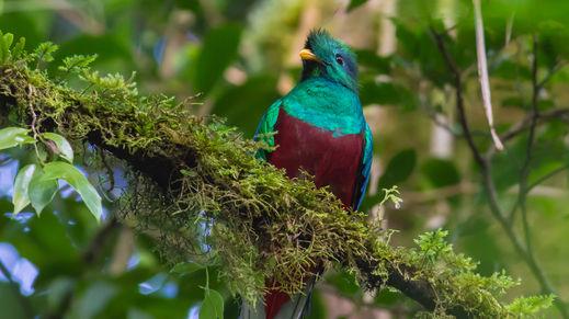 Biotopo del Quetzal, Guatemala