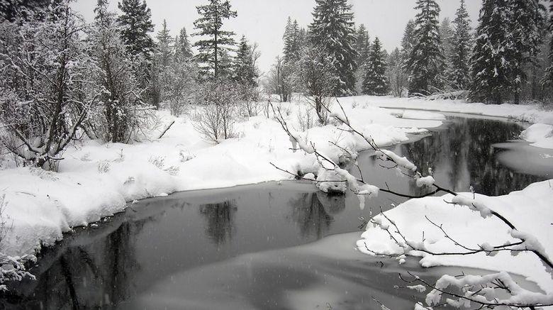 Whistler Scenery