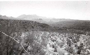 Picture of Aravaipa Creek. Place where Camp Grant Massacre took place