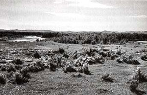 Picture of Powder River Battle Site