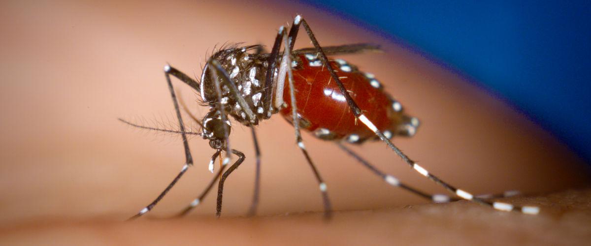 Dengue Fever treatment