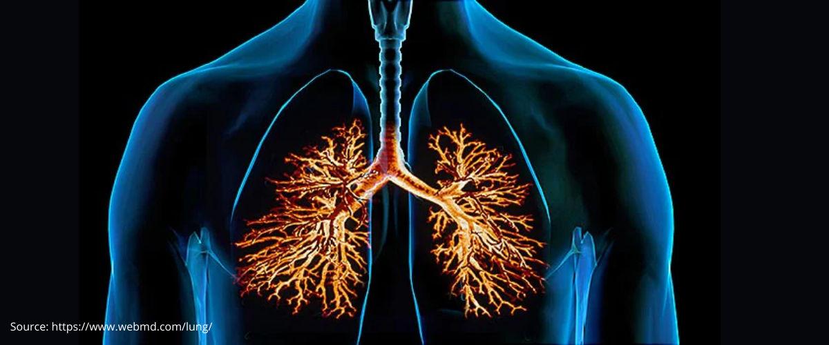 Bronchitis Treatment in Pune