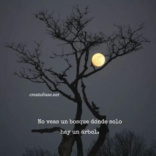 Frases sobre Pensamientos - No veas un bosque dónde solo hay un árbol.
