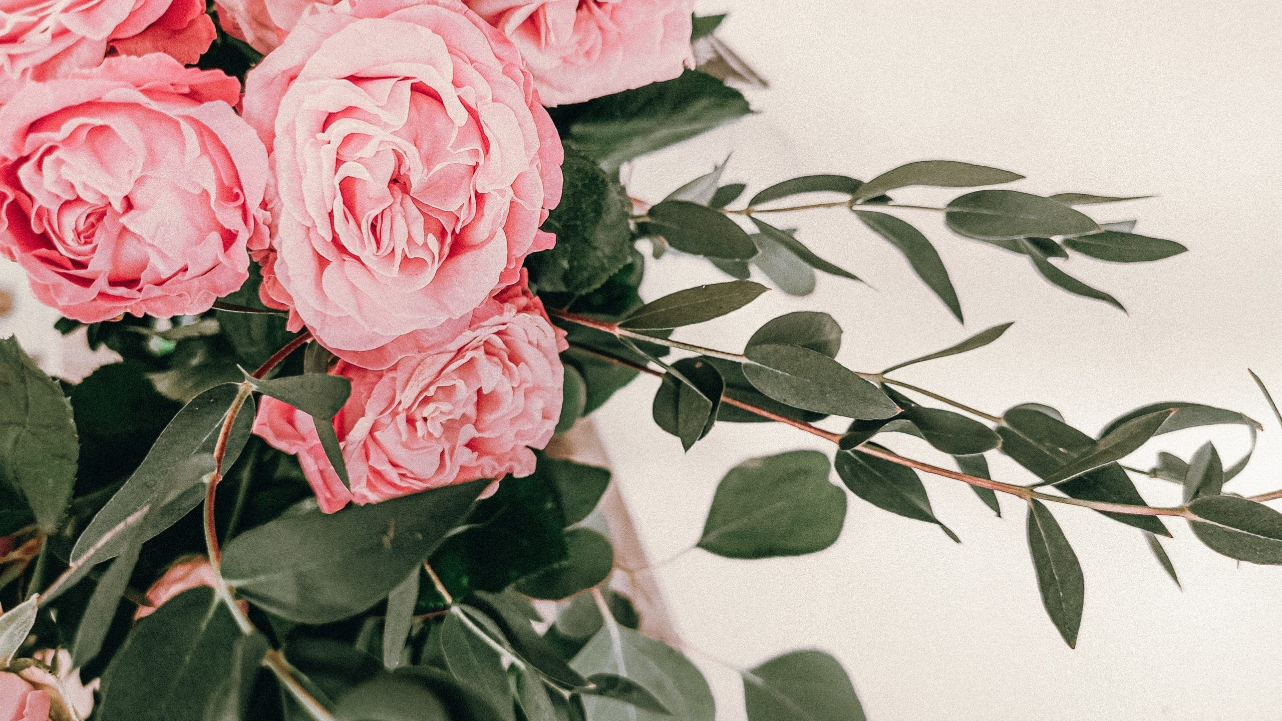pink-roses-in-close-up-photography-3817038