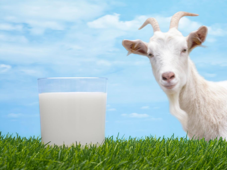 羊奶粉生产商Bubs季度收入激增96%,股价攀升23%