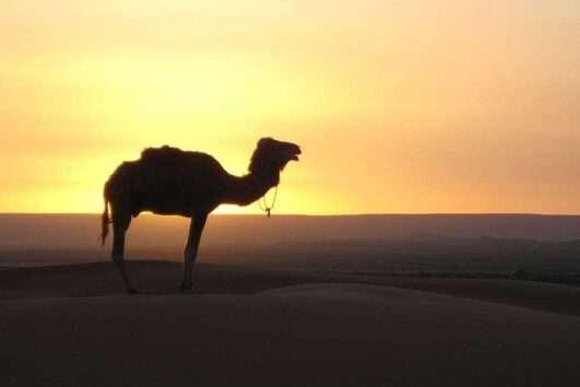 fes to marrakech tour 4 days