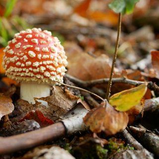 Pilze im Pfälzerwald