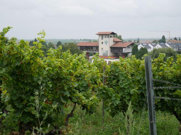 Einstiegspunkt Weinsteig Etappe 1